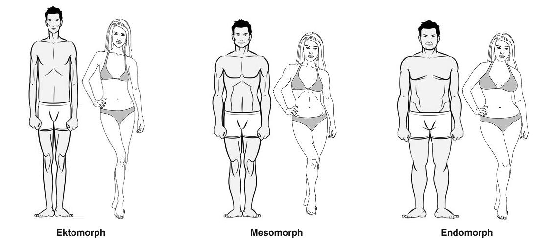Finde heraus welcher Körpertyp du bist, um die besten Erfolge zu ...